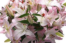 Aquarelle - Oferta de la semana: 14€ de descuento en el ramo de Liliums perfumados codigo promocional descuento oferta
