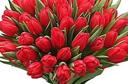 Aquarelle - Oferta de la semana: 30 tulipanes rojos por tan sólo 25€, válido hasta 25-Enero-2009