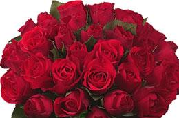 Aquarelle - Oferta de la semana: 30 rosas rojas por tan sólo 25€, válido hasta 15-Febrero-2009