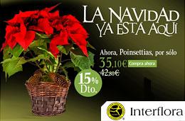 Ofertas Interflora con un 15% de descuento adicional en las plantas de Navidad Poinsettias para regalo