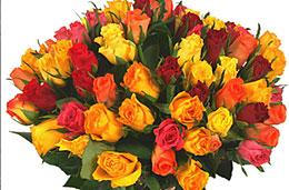 Aquarelle oferta semana Rosas multicolor codigo promocional descuento
